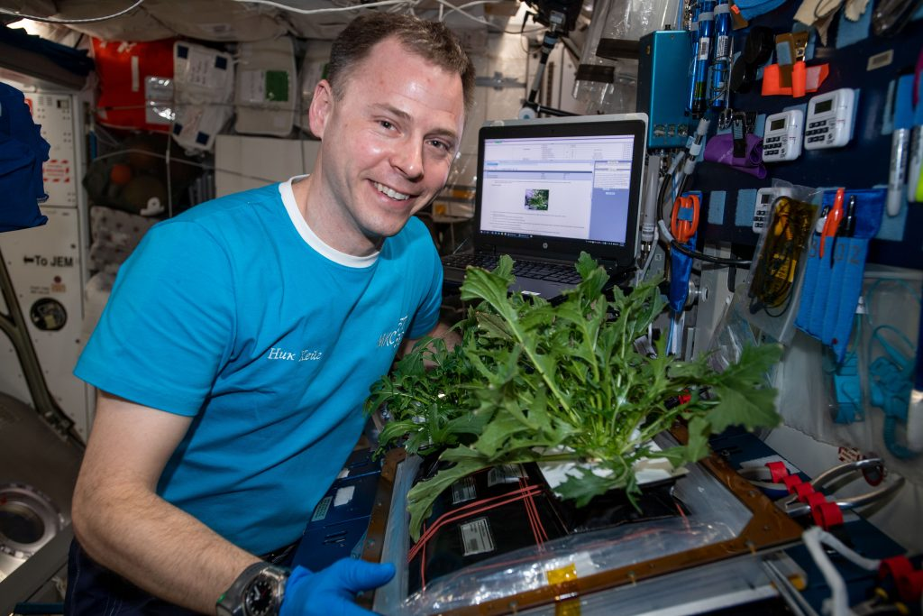 Nick Hague harvests Mizuna mustard greens on the International Space Station.
